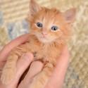 Quando devo começar a vacinar meu filhote de gato?