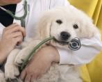 Comidas que ajudam no adestramento de cães