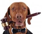 Legislação Animal