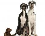 Idade do Cão - Saiba como calcular a idade do seu pet