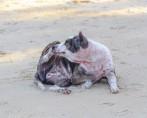 Sarna em Cães - Saiba como identificar e tratar este problema