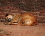 Cães Abandonados - Saiba como ajudar