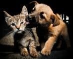 Proteção aos Animais - Saiba como ajudar