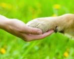 Maus-tratos a Animais