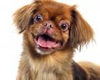 Cães Engraçados - Vídeos e Fotos Divertidos da Internet