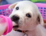 Gestação Canina - As Dicas de Cuidados