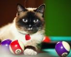 Jogos de Gatos para o seu bichano tecnológico