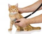 Saúde dos Gatos em Detalhes