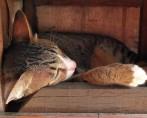 Como Aplicar Remédio para Gatos