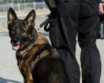Cães Policiais - A atuação de animais que também podem ser heróis