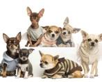 Roupas para Cães - Necessidade ou exagero?
