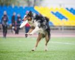 Frisbee - Esporte e diversão