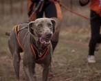 Canicross - Esporte canino