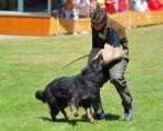 Schutzhund - Atividade canina