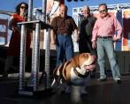 Conheça o Cachorro Mais Feio do Mundo