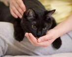 Ração Diet para Gatos
