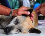 Castração de Cães em Detalhe