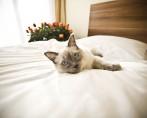 Hotel para Gatos - Tudo para o seu felino viajante