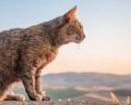 Gato Solitário - Mitos e verdades