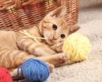 Adestrar Gatos - É possível?