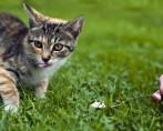 Adestrador de Gatos - Posso ser um ?