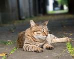 Gatos que Saem à Rua - Cuidados