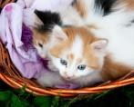 TOP 5 Gatos Fofinhos