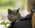 Gato Idoso - Cuidados especiais