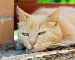 Síndromes de Gato - Coisas da terceira idade