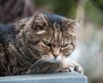 Gatos Idosos - Cuidados com seu gato vovô