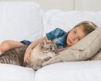 Gato em Casa - Garantindo um bom ambiente