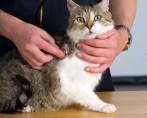 Vacinas em Gatos