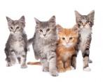 Tosa em Gatos - Tipos e técnicas