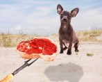 Bifinhos para Cachorros - Vantagens x Desvantagens