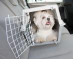 Caixa de Transporte para Cachorros - O que você precisa saber