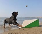 Flyball - Esporte canino