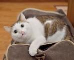 Viajar com Gato - 4 Cuidados essenciais