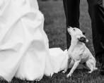 10 dicas para seu cãozinho participar do seu casamento