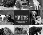 Conheça o projeto Vira-latas - Os verdadeiros cães de raça