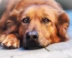 Eletrocardiograma em cães e gatos