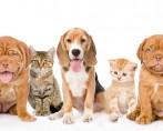 Posse responsável de animais é fundamental