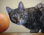 Frutas para Gatos - Pode?!