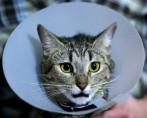 Especialista em gatos – Entenda o especialista em medicina felina