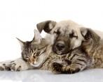 Cães e Gatos x Cigarro – A batalha
