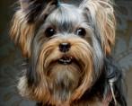 4 principais causas de amputação de cabeça de fêmur em cães e gatos