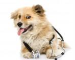 Equipamentos veterinários - Encontre todos os tipos e fornecedores