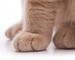 Cuidar de um Gato - Dicas e sugestões