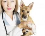 Hematúria – Seu cachorro ou gato está urinando sangue?