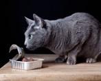 Ração Úmida para Gatos - Petisco ou comida?