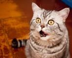 Como agir em casos de distrição respiratória em cães e gatos